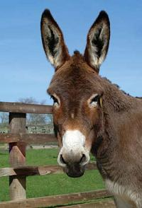 20080424113515-burro4.jpg
